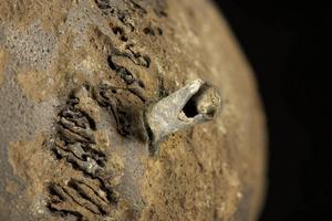 Flera av skallarna visar tecken på dödligt våld. På den här har en bronspil genomborrat skallbenet. Många av pilspetsarna hade några millimeter av själva pilen kvar, något som hjälpte forskarna att datera slaget till cirka 1280 före vår tideräkning.   Foto: V. Minkus for the Tollense Valley research project/TT