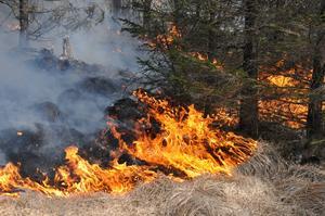 Gräsbränder sprider sig snabbt och kan snabbt bli okontrollerbara.