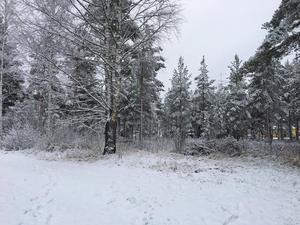 Första snön i Mora, vid niotiden på morgonen