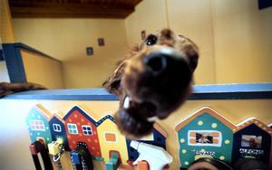 Ett hunddagis i Lanna kan eleverna i klass 5 på Hidinge skola tänka sig.