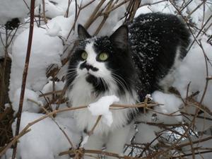 Våran katt Bosse gömmer sig i buskarna för att komma närmare  fåglarna som han ser