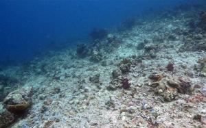 Fiskebestånd kollapsar och havet blir ödemark som på bilden; skogsområden blir öken och oljan sinar. Den finanskris som tycks vara det enda som politiker reagerar på är bara ett symtom på en långt större kris, menar Björn Forsberg.