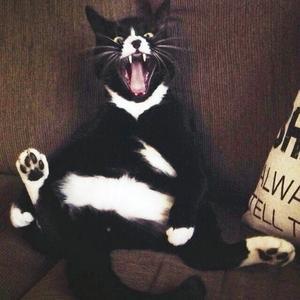 Bilden på katten Roffe gav segern i årets bild 2014.