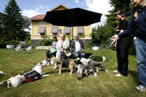 Dolly, Frasse, Ludvig, Bosse och Morris träffades och trivdes i gröngräset tillsammans med sina mattar Birgitta Geschwindt, Siw Bäckström, Barbro Thorsberg, Sofia Engberg och Sonja Engberg.