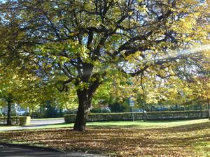 Det var riktigt vacker höstdag när jag promenerade på Vasaparken.