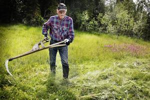 Sivert Johansson visar hur man använder en lie i myrmarkerna.