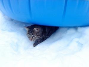 Att hitta katter uppe i träd som inte kan komma ner är vanligt, men att se en fastna under en