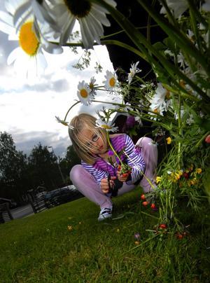 Hjälpreda. Frida Engström, 7, höll koll på att allt gick rätt till. Blommor i massor hade hon att hålla reda på.