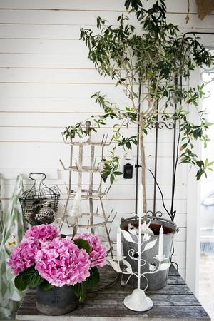 En cerise hortensia blir en snygg kontrast till de höga träden och den industriella känslan.