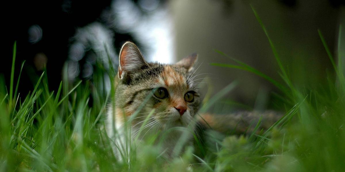 bli av med katter på tomten