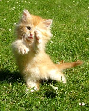 Utomhus en härlig sommardag.Våra kattungar var lekfulla och man fick många fina, men även lite lustiga bilder!