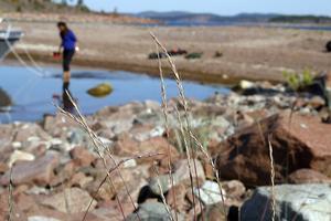 Gräset lundelm i förgrunden tyder på att miljön vid stranden kan ha höga värden.