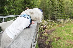 Älgen Etna har fått en kalv och den gick det att titta länge på.