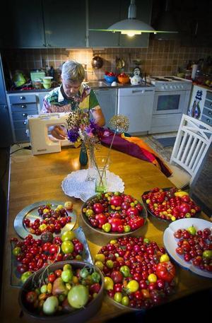 Tomatskörden pryder köksbordet hemma hos Anders Sundin.