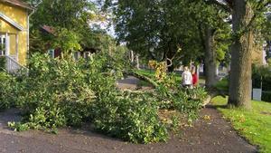Den stora grenen blockerar vägen vid kyrkogården i Ramnäs.