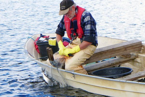 Per-Arne Holt-Seeland är Nordens främste expert påreduceringsfiske. Hans metod ger framgångar för Grundsjörödingen.