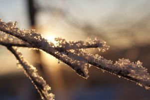 När det var riktigt kallt ute ca 30 minusgick jag ut och tog det här kortet. Foto: Elin Skoglund