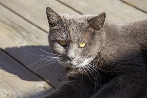 Ge din katt  lite tid att vänja sig om du tar med den på semestern. Om den vill gå ut kan du börja med sele och koppel.