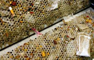 En cigarettfimp och en binda. Det blev de stora fynden när Länstidningen inspekterade den två veckor gamla grovrensningsmaskinen på Gövikens reningsverk.
