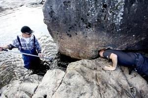 GÖMMER SIG. Johnny Rintanen försöker få fram fiskarna under stenen. Roger Timbré väntar med håven.