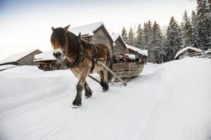 Barn och föräldrarna hade möjlighet att åka släde bakom hästen Tor.