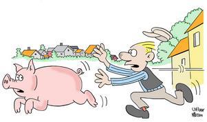SPARGRIS. I början av 1800-talet kunde man tjäna en slant på att jaga grisar i Gävle. Det fanns 200 svin i centrala staden och den som fångande en gris som var på rymmen kunde kvittera ut ett par riksdaler i ersättning. Teckning: Ulf Ivar Nilsson