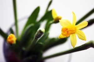 Ett tydligt tecken på att våren är påväg!