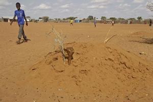 död. En pojke tittar på en barngrav i staden i Kenya. Hit, till världens största flyktingläger, kommer många svältande somalier.