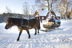 En färd med hästsläde genom det snöiga vinterlandskapet är en av många naturupplevelser som Larsbo gård lockar med.