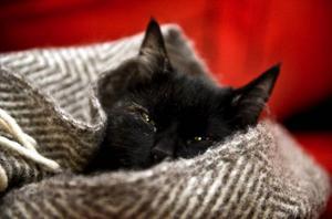 Katten behöver komma in och värma sig när kylan fortsätter hålla i sig.   Foto: Scanpix
