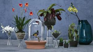 Tre till fem olika vaser kan vara en bra bas att ha hemma. Dessa kommer från Habitat.