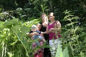 Inga Lill Meijer med barnen Ebba, 9, Liam, 7 månader och Fanny, 11, tycker att kommunen borde bekämpa de giftiga jättebjörnlokorna.