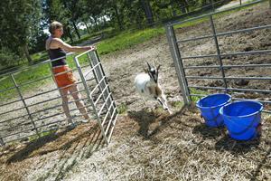SMITARE. Maria lockar rymlingen med färskt vatten.