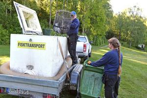 Sten Karlsson och Gia Roslund lastar av 75 kilo fina fiskar i Båtstasjön.