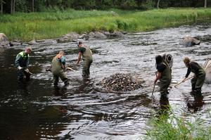 Bättre lekområden för lax och öring innebär mera lax och öring.Personal från Skogsstyrelsen hjälper till med att förbättra lekområden i Testeboån.