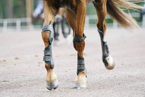Travhästen i Rättvik ska ha fått en djup sårskada på benet. Trots operationer fick den avlivas.