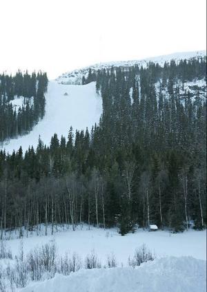 200 meter från backen, i skogen till höger på bilden, blev pojken attackerad av björnen.