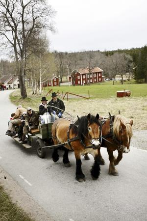 På hemmaplan. Ardennerhästarna Nisse och Mille bor i Pershyttan och drog besökare på turer genom byn under Jernhelja. Körde gjorde Ingvar Karlsson och Anna Ljudén.