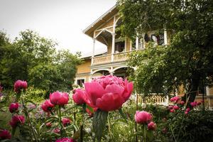 Det är inte svårt att föreställa sig varför Wictoria och Peter Boije förälskade sig i platsen. Trädgården är främst Wictorias verk - blommor och växter blandas med vackra detaljer.