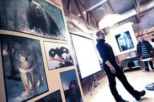 Länsstyrelsen. Rovdjurshandläggaren Sara Hommen gjorde klart för åhörarna att en inplantering av varg kommer att ske, fråga är bara var och när.