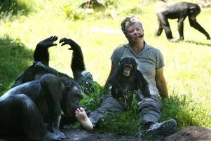 Selma i knäet och Santino på foten. Ing-Marie Persson serverade publiken fakta och erfarenheter om sitt liv med schimpanserna.