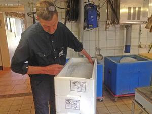 Per Vidlund på Ängsö Fisk i Mälaren är först i Sverige med kravmärkt gös