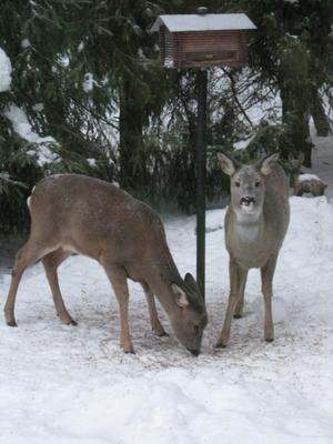 Glöm inte mata våra vänner i naturen!