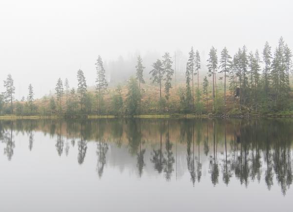 En dimmig och disig morgon vid sjön värlingen.