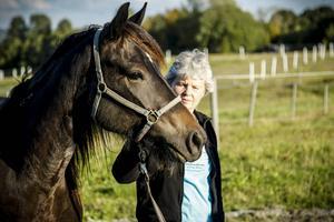 Margareta Hafstad med Bona Kitty. Resan är lång från gården i Sörviken till Oslo. Familjen Hafstads hästar har inte alltid druckit bra efter de långa resorna, något som kommer behövas på söndag om det ska kunna bli utdelning i de fina årgångsloppen.