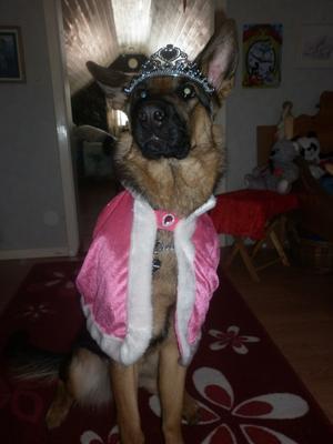 Så här kan det gå när Dottern Thindra 3år får styla om en av familjens hundar!