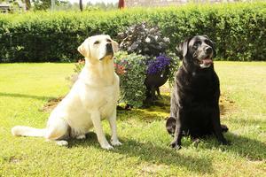 Walle och Buster verkar trivas med att posera framför kameran.