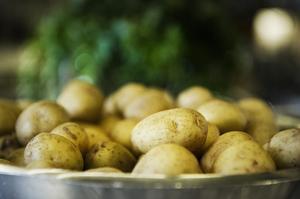 När det finns svensk färskpotatis att tillgå, då är den en naturlig ingrediens på Björn Melbins meny.