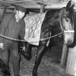 I Ina, mellan Söderhamn och Söderala, höll Erik Berg på med sitt hovslageri. Bilden är från 1980-talet.