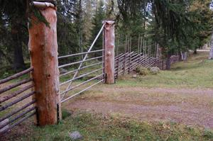 Totalt 2,4 kilometer ny gärdesgård är nu uppsatt genom Rämma fäbodar.